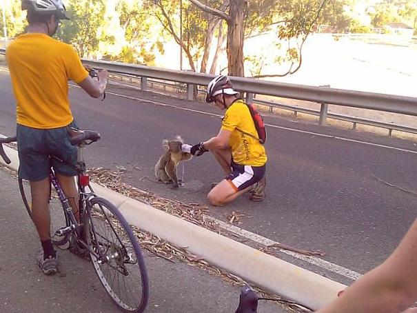 Jalgrattur ja koaala