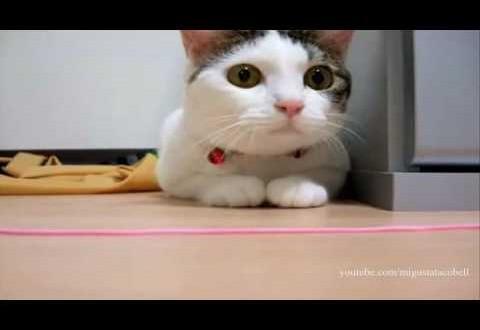 LSD-d söönud kass