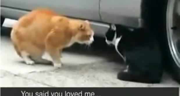 armuvalus kass