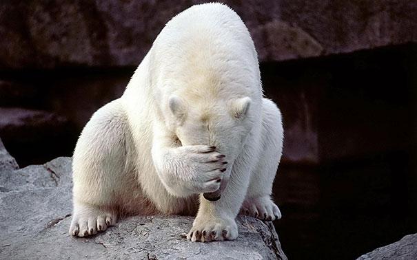 funny-bears-doing-human-things-101