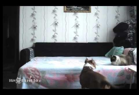 koer üksi kodus
