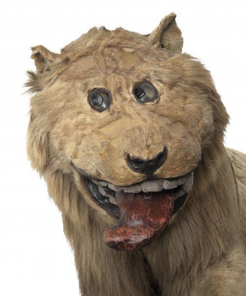 Õilis lõvi