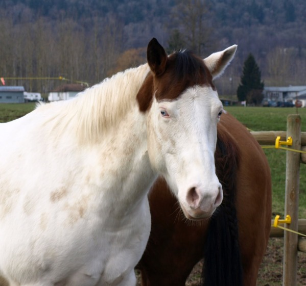 Hobune mütsiga