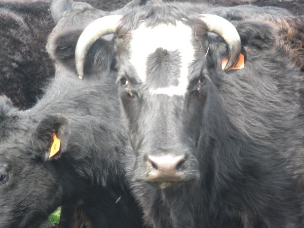 Lehm ruudus