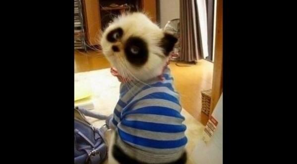 Pandakass
