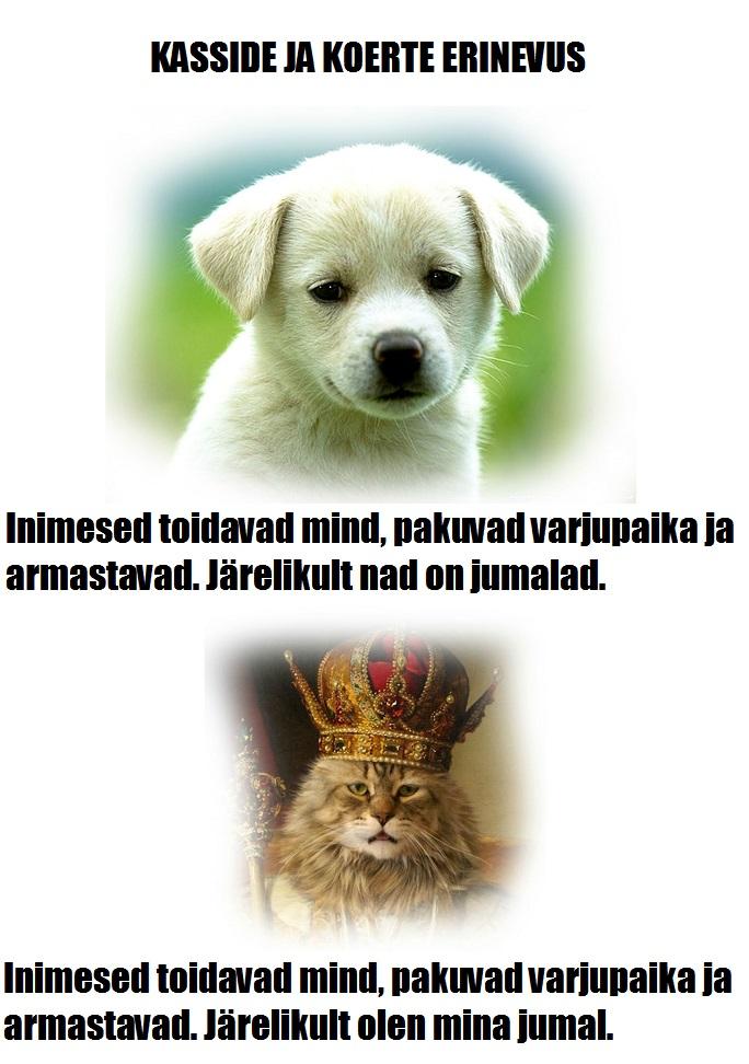 koerad vs kassid