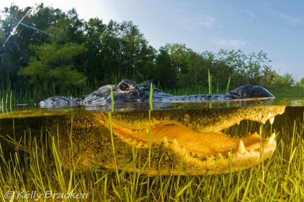 Everglade Floridas