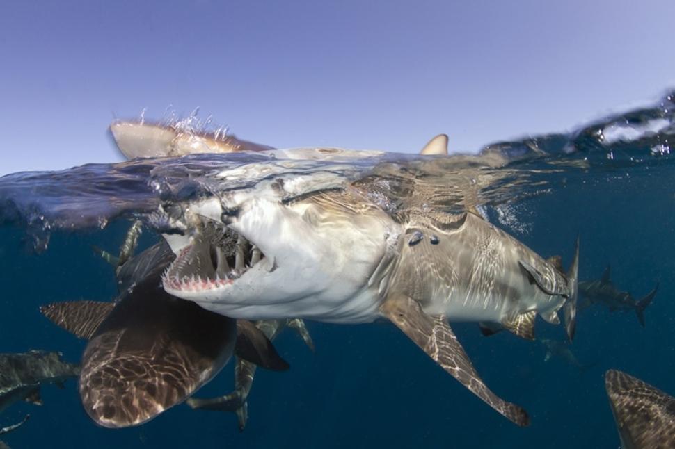 Hai park Lõuna Aafrikas