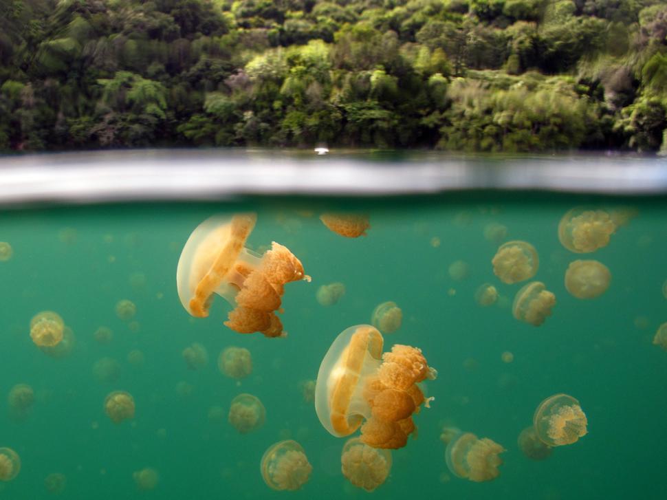 Millimallikate järv Palaus