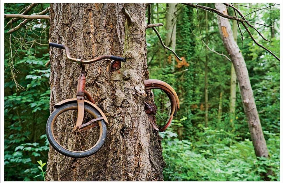 Puu, mis kasvab ümber hüljatud jalgratta
