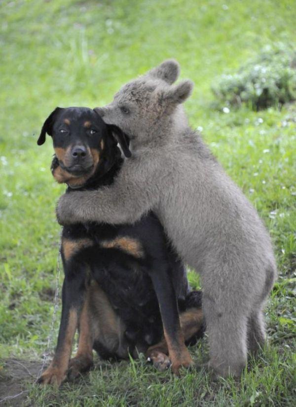 armsad loomad 14