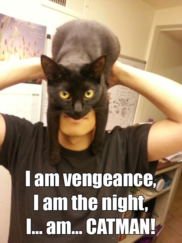 catman1