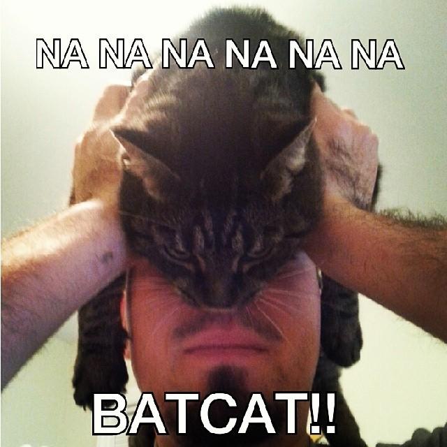 catman14