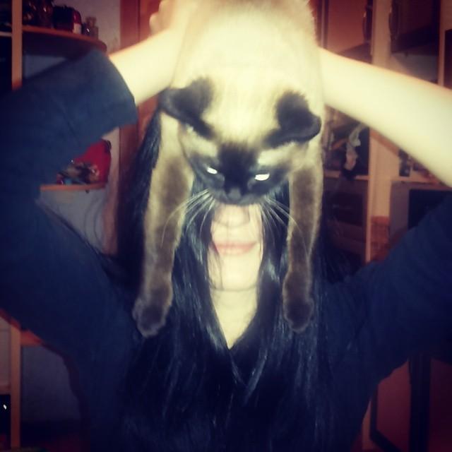 catman6