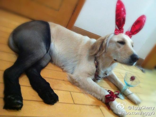 koer sukkpüksid 10