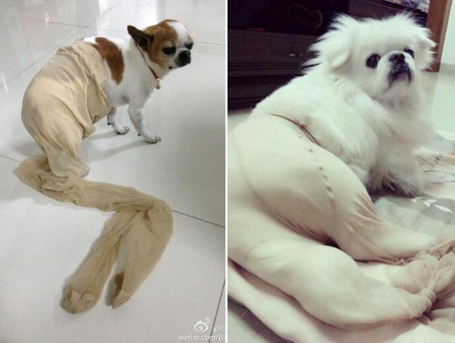 koer sukkpüksid 15