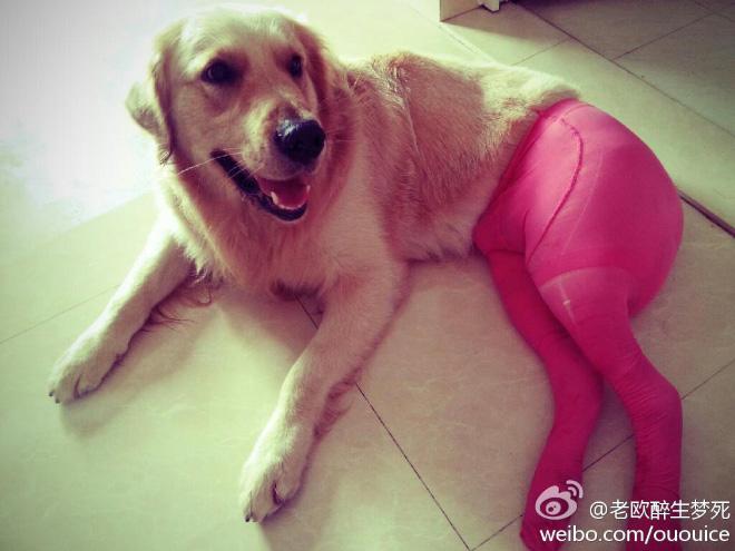 koer sukkpüksid 6