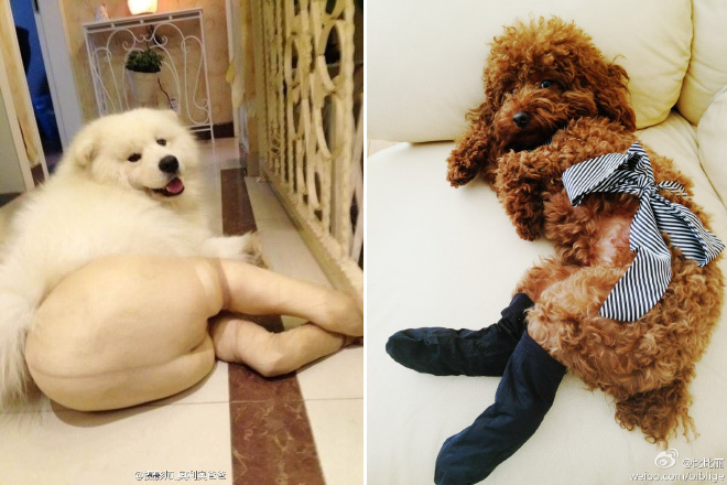 koer sukkpüksid 7