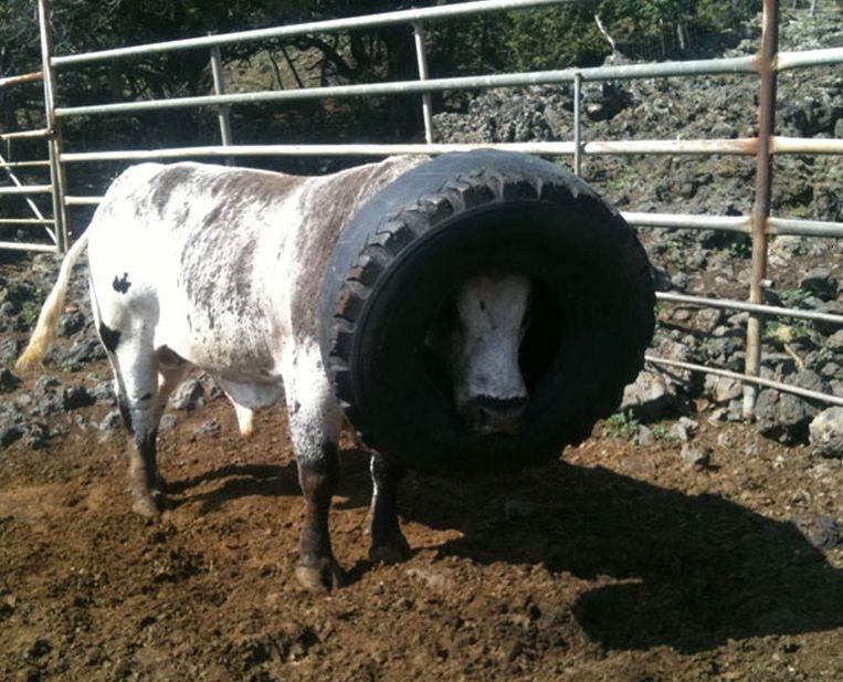 lehmad 10