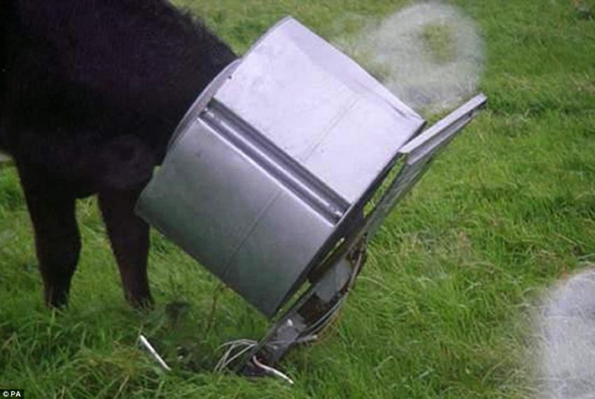 lehmad 11