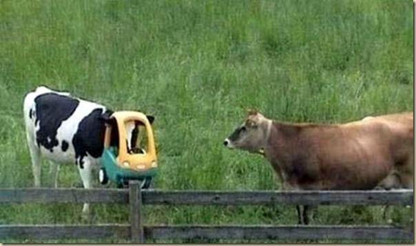 lehmad 12