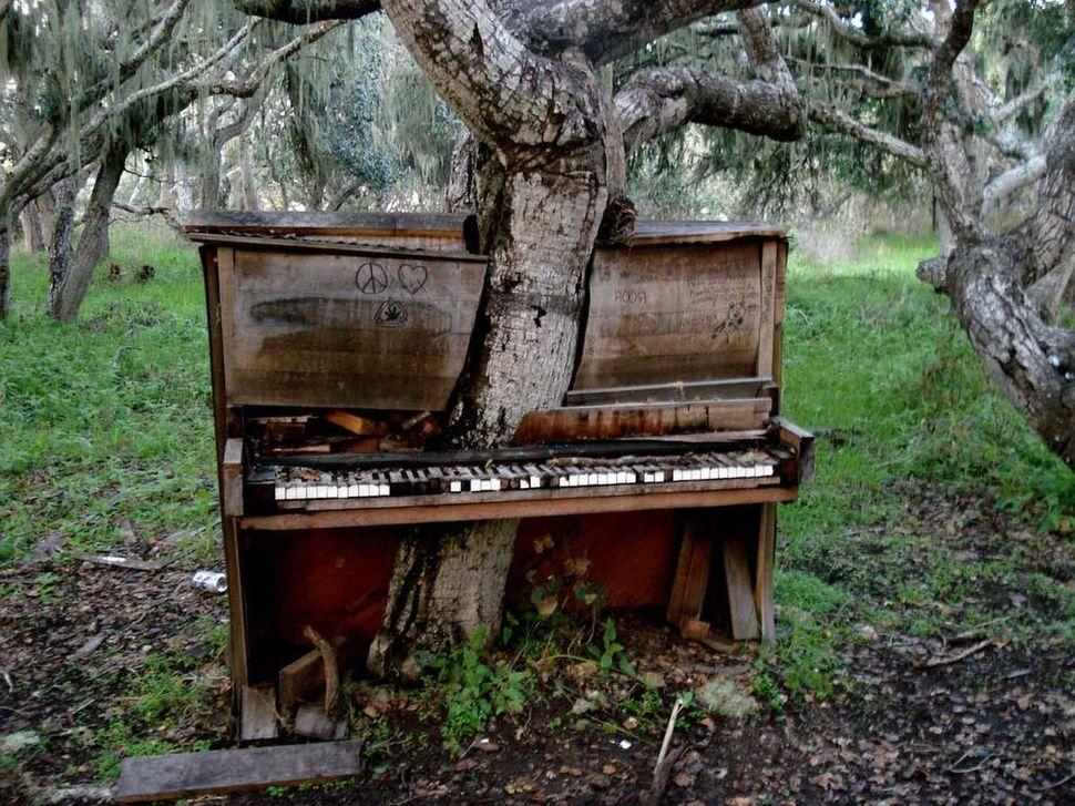 puu klaver