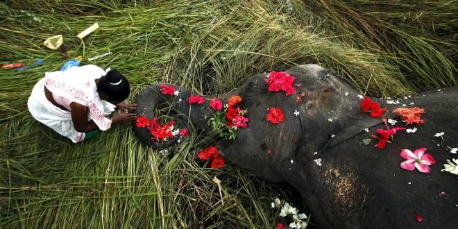 15 Matused elevandile, kes jäi Indias rongi alla
