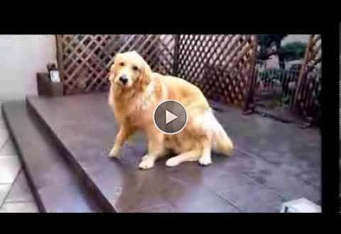maagiline koer