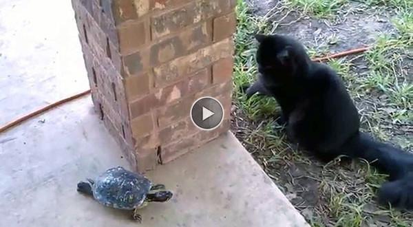 kass ja kilpkonn