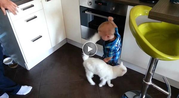 kass kaitseb