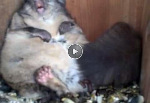 orava söögimaja