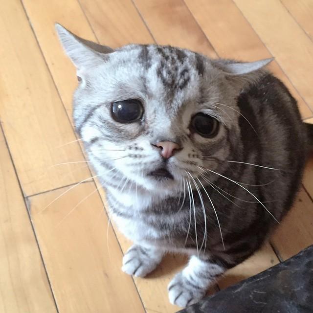 kurb kass 2